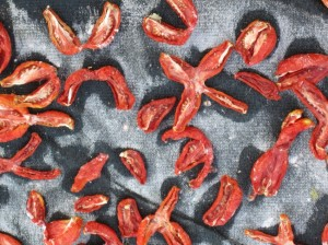 Making sun-dried tomatoes
